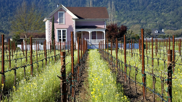 Visita viñedos de california