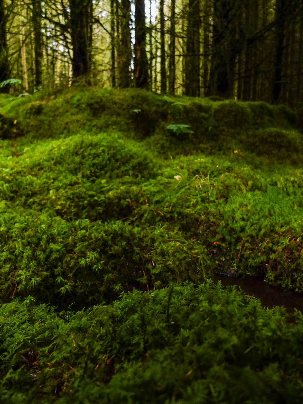 Moss covered mounds inside a forest.