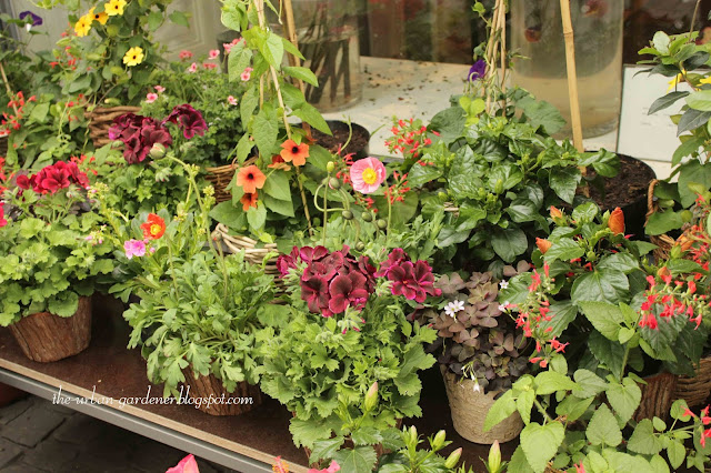 Travel tourism in Zurich, florists and plants