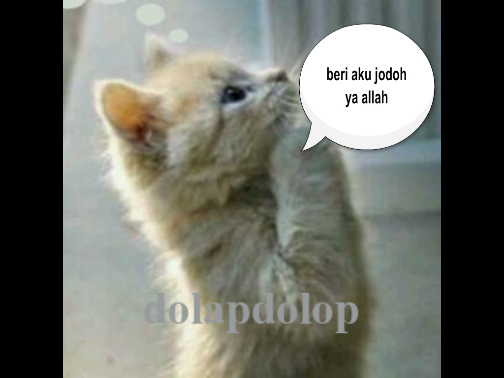 Gambar Kucing Romantis godean.web.id