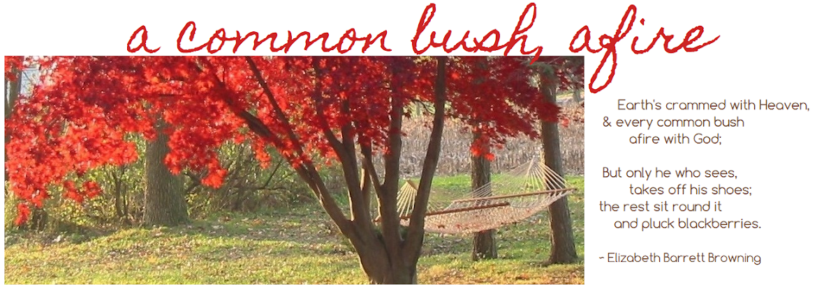 a common bush, afire