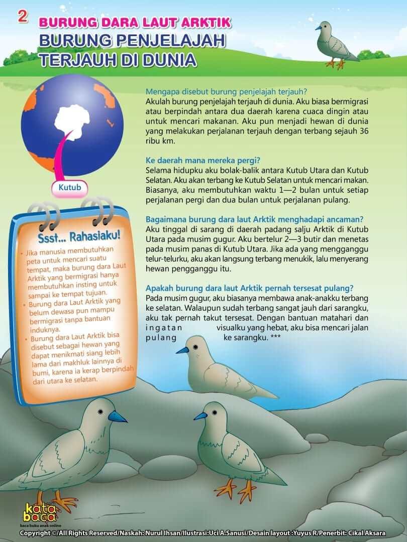 Burung Dara Laut Arktik - Burung Penjelajah Terjauh di Dunia