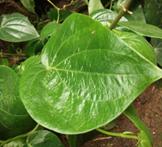 gerak hodrotropisme positif, gerak pada tumbuhan