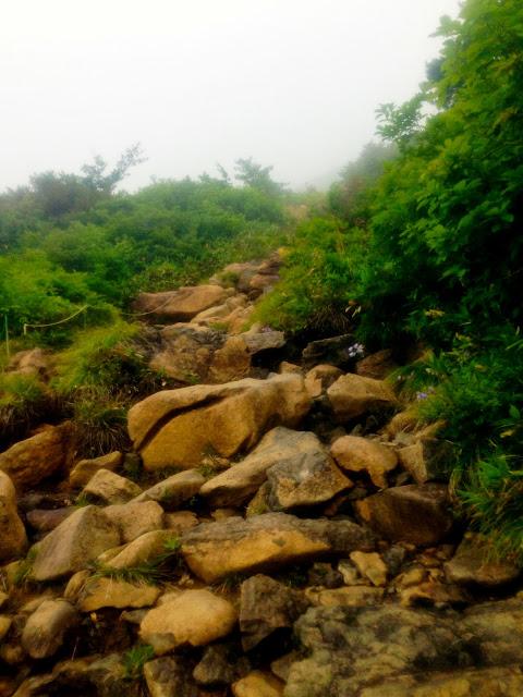 蛇紋岩植物