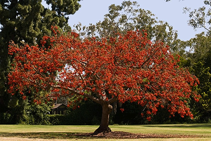 Rw Paisagismo Rvore Corticeira-4877