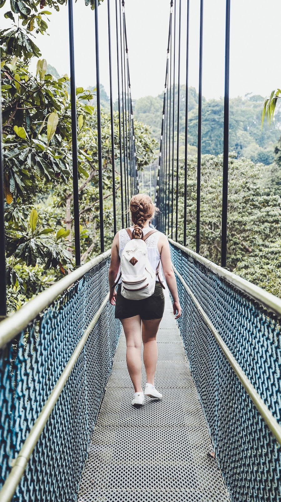 4 Ways To Explore The MacRitchie Reservoir TreeTop Walk in Singapore