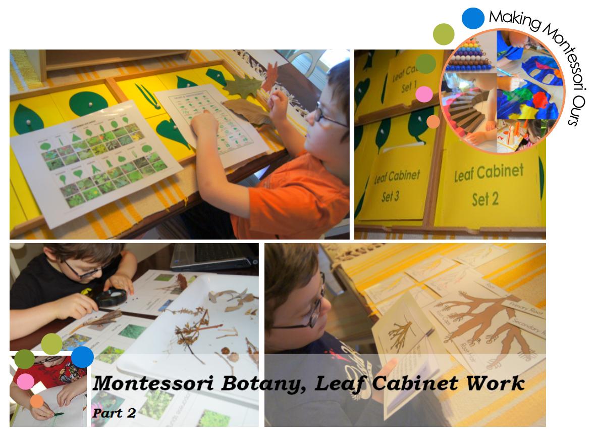 Making Montessori Ours Botany 2