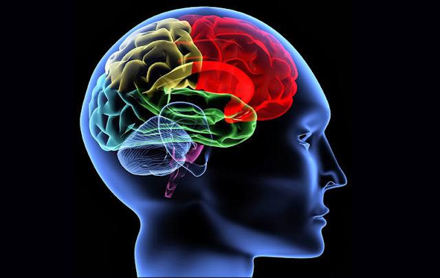 6 Jenis Makanan yang Baik Agar Otak Sehat