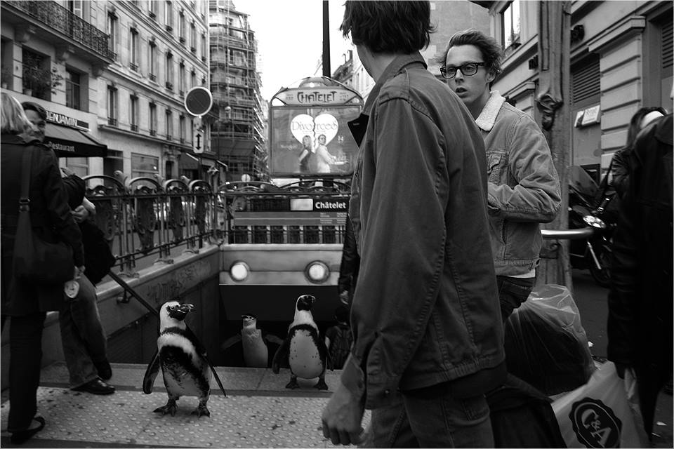 10-Penguins-Ceslovas-Cesnakevicius-The-Zoo-on-our-Streets-Black-and-White-Photography-www-designstack-co