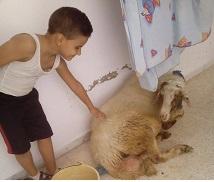 مؤثر/في حي التضامن: طفل الـ15 سنة يلقى حتفه بسبب علوش العيد..وهذه التفاصيل..