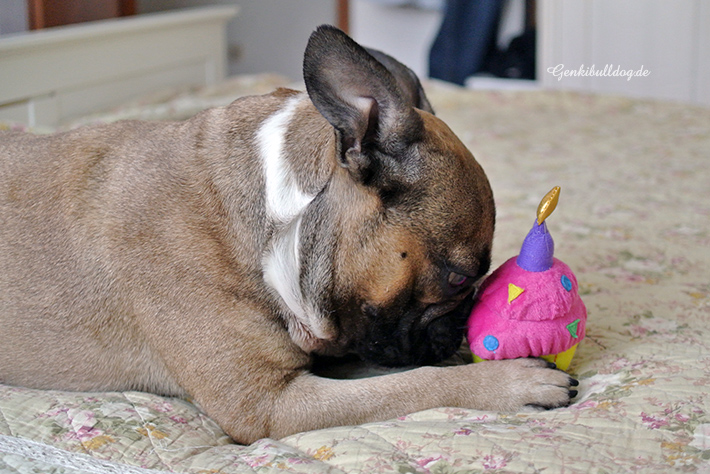 Geburtstagsgeschenke für Hunde - Hundeblog Genki Bulldog