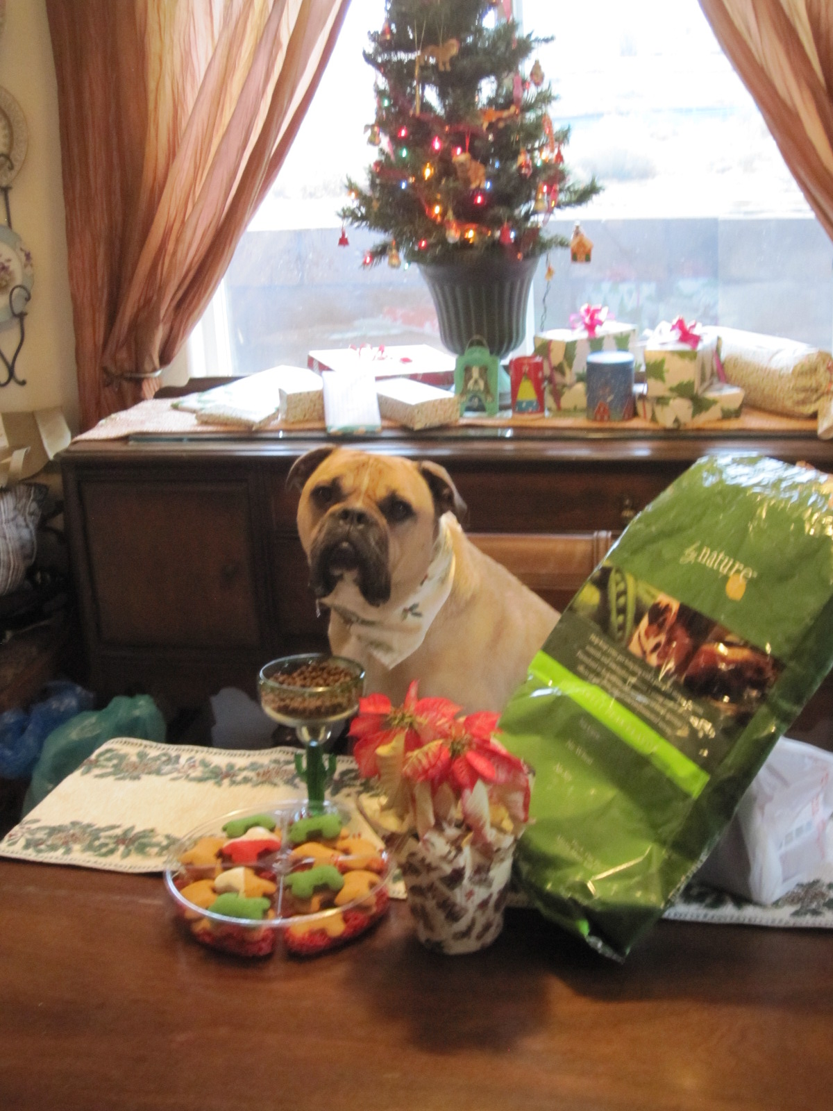 Christmas Dinner Ideas for Dogs and Cats | STYLETAILS |Christmas Vacation Dog Dinner