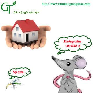 Cách đuổi chuột tại nhà bằng mùi hương tự nhiên hiệu quả 99%