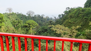 Birdview over the jungle in Equatorial Guinea