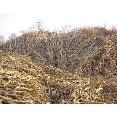 List five agriculture wastes. Explain in brief heir utilization.