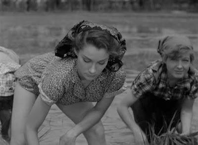 Doris Dowling - Arroz amargo (1949) Riso amaro » Descargar y ver online