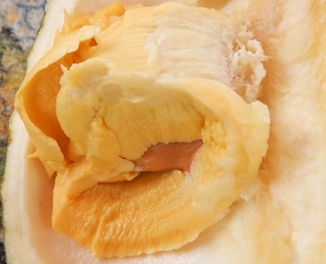 BIBIT DURIAN RAKSASA BAWOR, Cara Indah Memasak Lewat Tanaman Durian