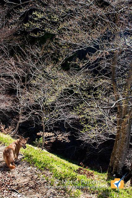 Ambra sul sentiero dell'alpe Cortina