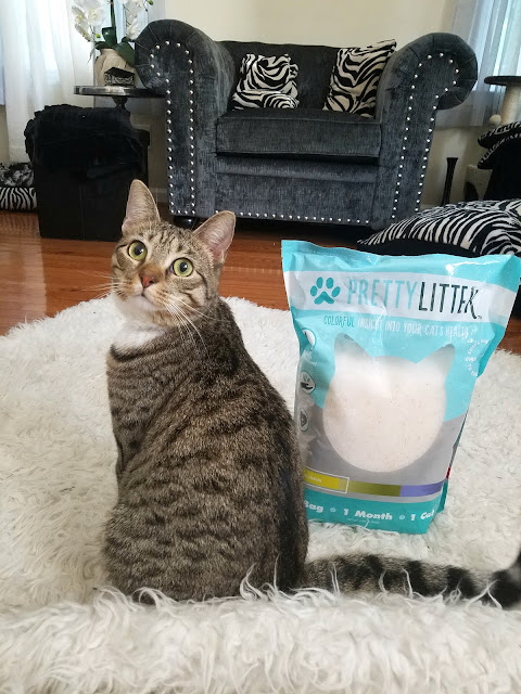 The benefits of PrettyLitter Cat Litter By Barbies Beauty Bits