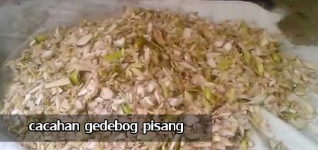 Bahan Bahan Untuk Membuat Pakan Fermentasi Ternak Sapi