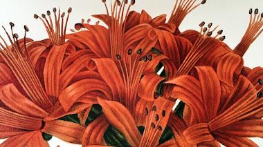 Colección Les Liliacées de Redouté en el Real Jardín Botánico