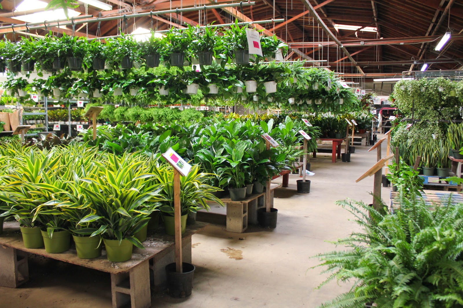 It Was Shocking Like The Costco Of Indoor Plants Some Major Nitrogen Going On In Here But Selection Amazing And Prices