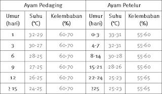 tabel kebutuhan suhu dan kelembaban ayam pedaging