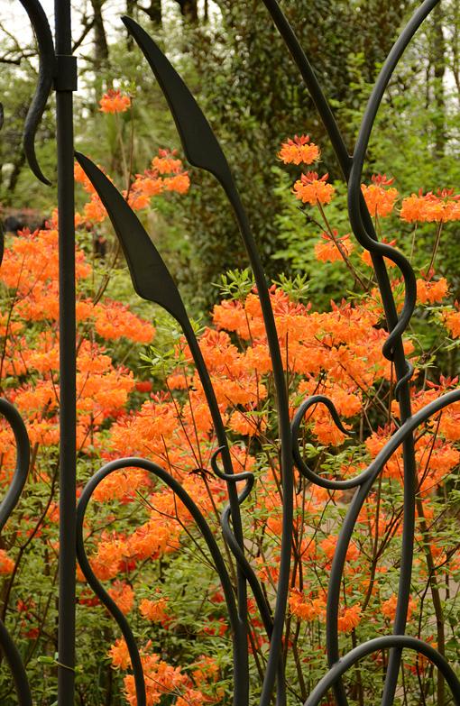 Atlanta Blooms | Atlanta Botanical Garden