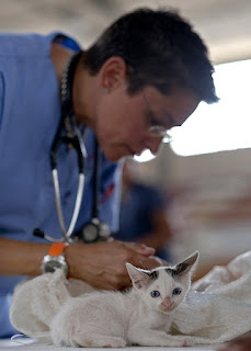 A veterinarian with a cat.