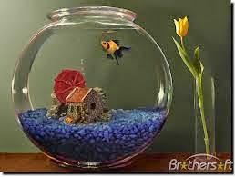 Ikan Koki Di Aquarium Bulat Aneka Ikan Hias