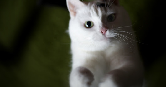5 Tips for Successful Cat Photos