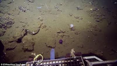 Δείτε τι βρήκαν στα βάθη του ωκεανού