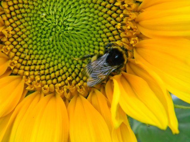 kwiaty, zapylanie, przyroda, ogród