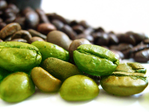 How does green coffee bean extract work in the body ...