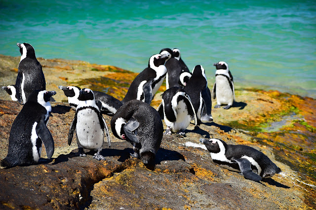 Simon's Town Boulders Beach Pinguine