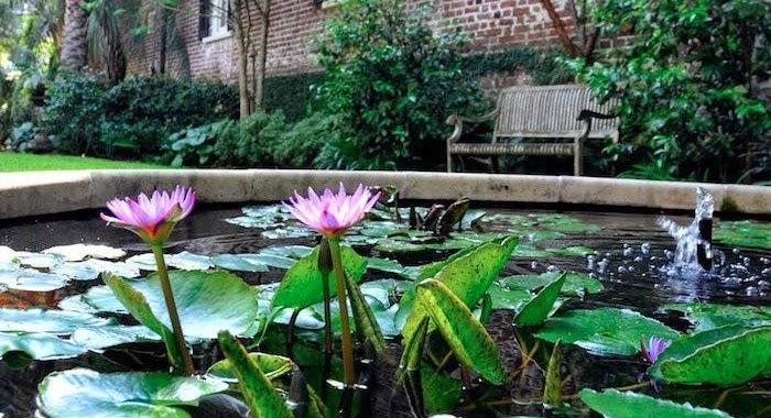 Uredi baštu : Jezero u vrtu, ribnjak - odlučite sami!