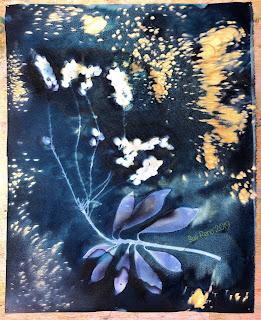 Wet cyanotype_Sue Reno_Image 577