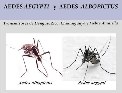 http://www.ceip.edu.uy/documentos/galerias/prensa/1243/pre_aedes_aegypti.pdf