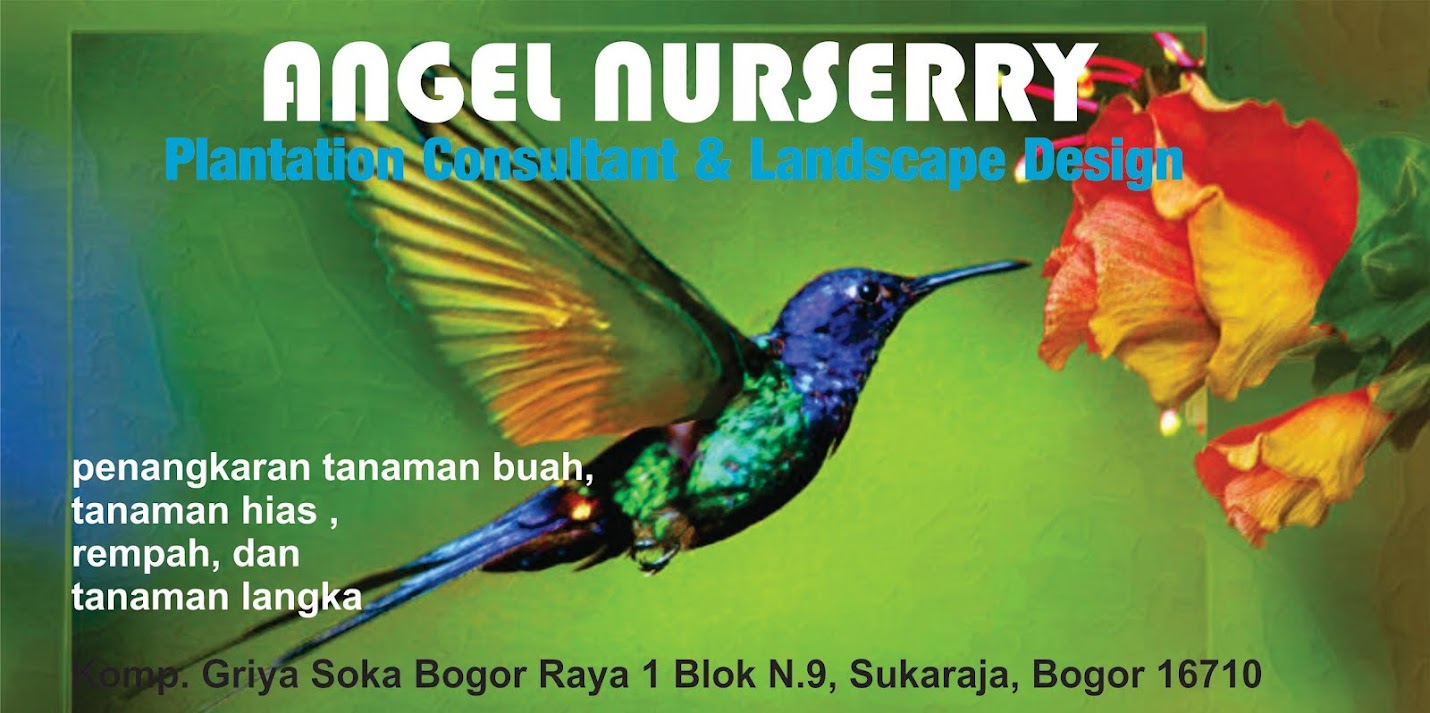 ANGEL NURSERRY