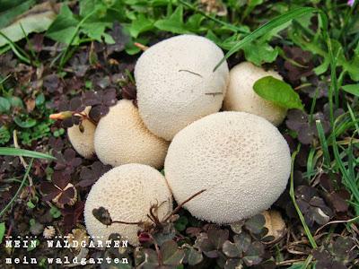 Fabulous Mein Waldgarten: Pilze im Garten NO09