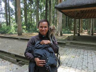 Monyet Ramah dan Menggemaskan di Wisata Sangeh Monkey Forest Bali