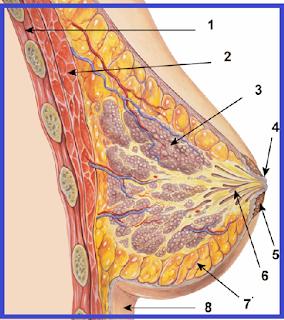 اعراض التهاب الثدي !! ما هي اعراض التهاب الثدي ؟؟