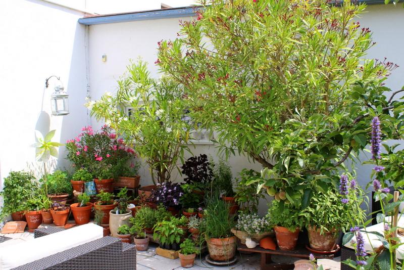 Blick auf den Kräutertopfgarten | Arthurs Tochter Kocht by Astrid Paul