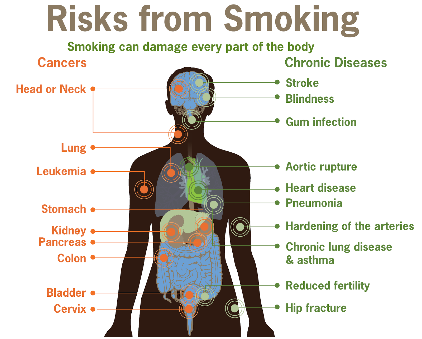 cause and effect essays on smoking essay world war what caused  should cigarette smoking be banned essay typer why not buy should cigarette smoking be banned essay
