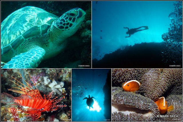 20 Top Rated Tourist Attractions in Indonesia Bunaken