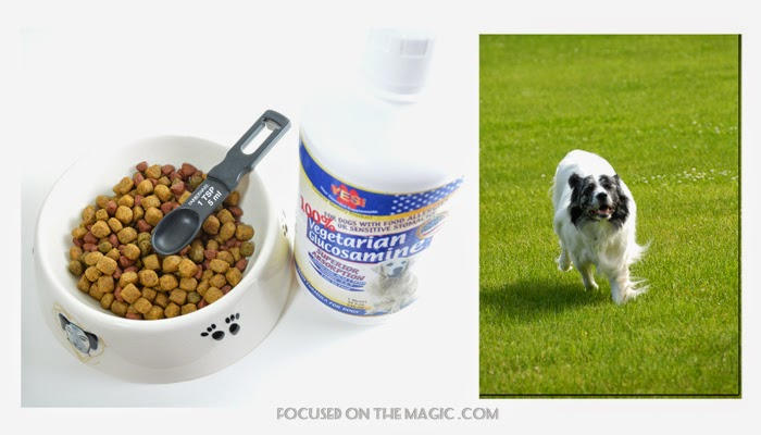 Food For Older Dogs With Sensitive Stomachs