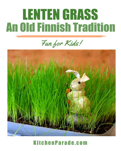 How to plant Lenten Grass, an old Finnish tradition ♥ KitchenParade.com, helping children mark the season of Lent.