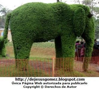 Foto de elefante hecho de plantas por Jesus Gómez