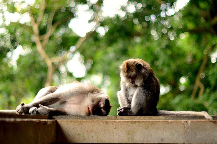 Monkey forrest, Bali, Indonesia