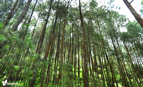 2 Air Terjun Desa Seloprojo Yang Mempesona, Sumuran & Ngesong | My Trip Quotes!! Eksapedia